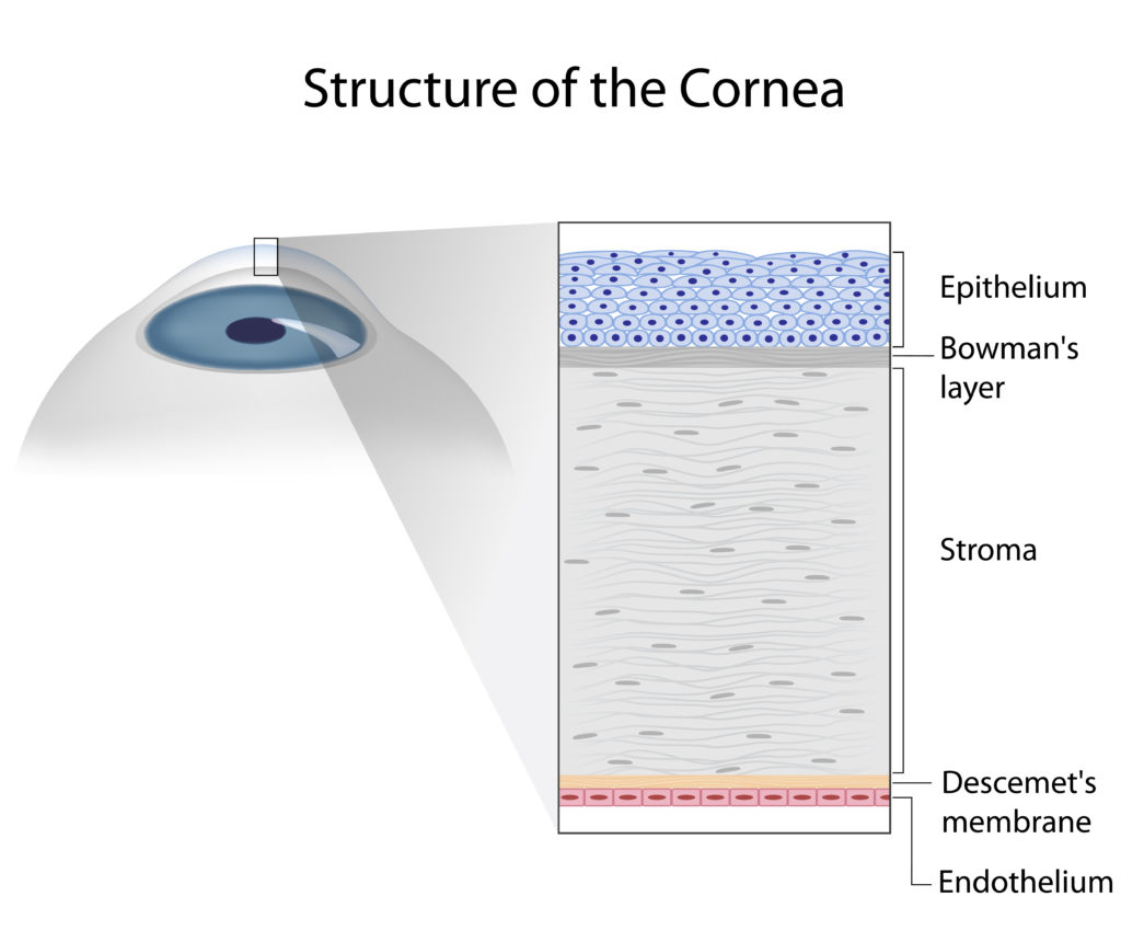 diagram of the layers of the cornea